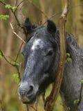 Tiro da cabeça de cavalo selvagem imagens de stock