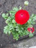 Tiro da flor imagem de stock royalty free