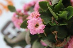 Tiro da flor com tiro macro Imagens de Stock Royalty Free