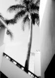 Tiro da foto da palmeira Fotografia de Stock Royalty Free