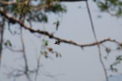 Tiro da mosca da mosca da mosca da mosca fotografia de stock
