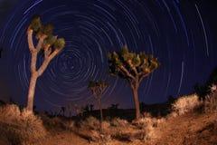 Tiro da noite de fugas da estrela no nacional da árvore de Joshua Imagens de Stock Royalty Free
