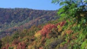 Tiro das árvores em uma montanha durante o outono vídeos de arquivo