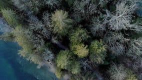 Tiro de arriba del bosque y de las trayectorias que caminan cerca de la ensenada profunda en Vancouver del norte metrajes