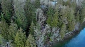 Tiro de arriba del bosque y de las trayectorias que caminan cerca de la ensenada profunda en Vancouver del norte almacen de metraje de vídeo