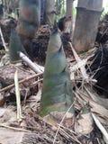 Tiro de bambu Foto de Stock