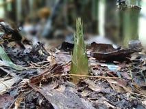 Tiro de bambu Fotografia de Stock