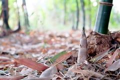 Tiro de bambu Fotos de Stock