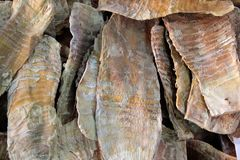 Tiro de bambu seco foto de stock royalty free