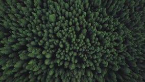 Tiro de cima com do zangão acima das árvores verdes das montanhas filme
