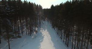 Tiro de la antena del bosque Nevado lanzamiento 4K metrajes