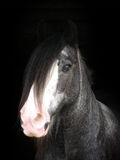 Tiro de la cabeza de caballo Imagenes de archivo