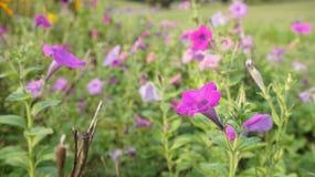 Tiro de la flor Fotos de archivo libres de regalías