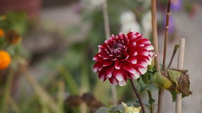 Tiro de la flor Fotografía de archivo