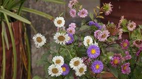 Tiro de la flor Foto de archivo libre de regalías