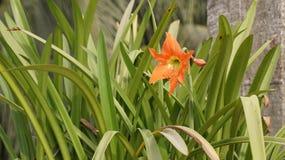 Tiro de la flor Foto de archivo