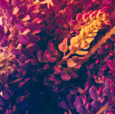 Tiro de la macro de las flores salvajes de la violeta y del purle Fotos de archivo libres de regalías