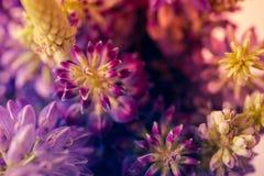 Tiro de la macro de las flores salvajes de la violeta y del purle Imagen de archivo
