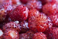Tiro de la macro de las fresas salvajes imagen de archivo