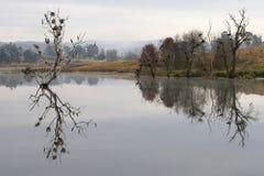 Tiro de la madrugada de los pájaros de agua que jerarquizan en los árboles atrapados en una presa Imagen de archivo