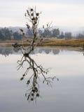 Tiro de la madrugada de los pájaros de agua que jerarquizan en los árboles atrapados en una presa Imagen de archivo libre de regalías