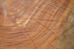 Tiro de madera de la macro del grano Imagen de archivo