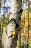 Tiro de papel amarillo de la vertical del pájaro Foto de archivo
