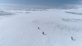 Tiro de seguimiento aéreo del pingüino del gentoo de la Antártida almacen de video