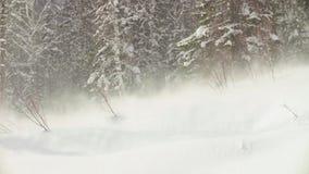 Tiro de uma aterrissagem do helicóptero na floresta do inverno video estoque