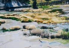 Tiro de Yellowstone Imagem de Stock Royalty Free