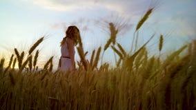 Tiro del ángulo bajo de la mujer romántica joven a través de los oídos maduros del trigo en la puesta del sol almacen de metraje de vídeo