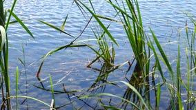 Tiro del carrello del lago della foresta al bello giorno video d archivio
