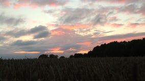 Tiro del carro que sigue lejos de un campo de trigo, con una puesta del sol de oro, roja y un cielo dramático almacen de metraje de vídeo