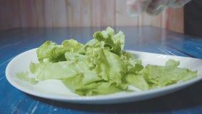 Tiro del cuoco unico un'insalata sul piatto archivi video