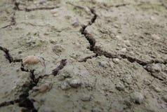Tiro del primer de la textura erosionada seca del suelo Fotografía de archivo libre de regalías