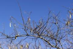 Tiro delantero para las ramas en la estación del otoño Fotos de archivo libres de regalías