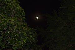 Tiro della luna con sbirciare le foglie fotografia stock libera da diritti