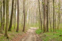 Tiro di modo la foresta Fotografia Stock Libera da Diritti