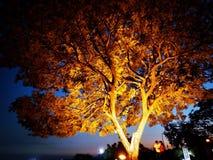 Tiro di notte del parco di Bhopal fotografia stock