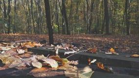 Tiro dianteiro da filtração das folhas em uma tabela de madeira velha em uma floresta no outono com o dia ensolarado video estoque