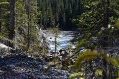 Tiro distante de uma fuga da água, através das árvores Fotos de Stock Royalty Free