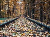 Tiro do baixo ângulo das estradas de ferro que atravessam as madeiras no outono fotografia de stock