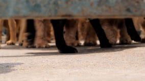 Tiro do baixo ângulo das patas dos cães que andam na cerca no abrigo, esperando para ser salvado e adotado à casa nova abrigo vídeos de arquivo