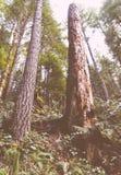 Tiro do baixo ângulo de árvores altas em uma floresta bonita fotografia de stock royalty free