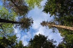 Tiro do céu da árvore foto de stock royalty free