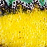 Tiro do close up da textura vitrificada da cerâmica foto de stock