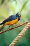 Tiro do close up de um pássaro com um fundo borrado. Imagens de Stock Royalty Free