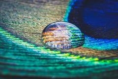 Tiro do close-up de uma pena do ` s do pavão com gotas Fotografia de Stock Royalty Free