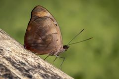 Tiro do macro da borboleta fotografia de stock royalty free