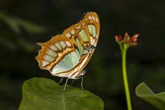 Tiro do macro da borboleta imagens de stock